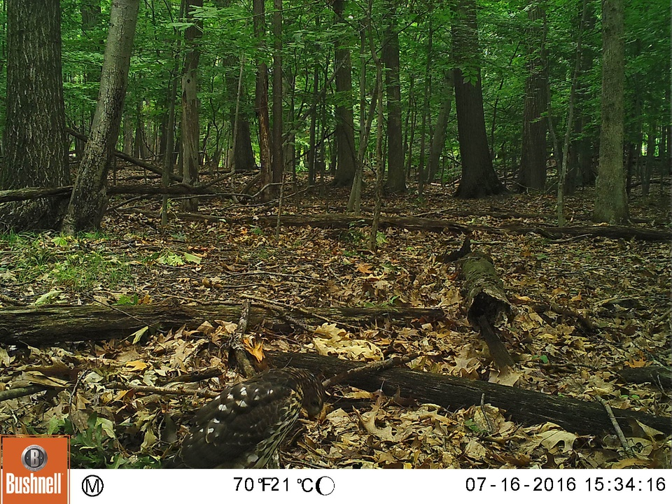 Focus on Wildlife -- Cleveland Metroparks » Talk — Zooniverse