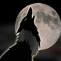 Nightwulf
